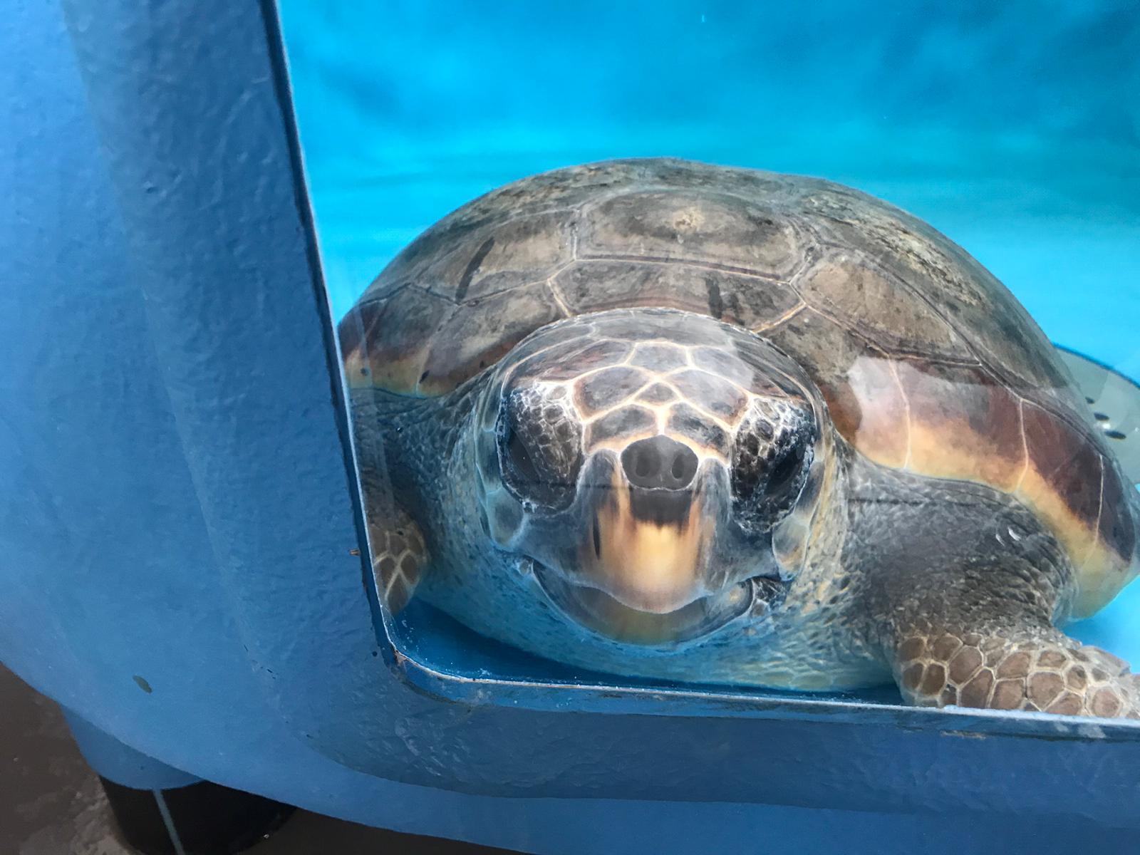 Turtle Point Progetto VELA